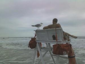 Seagullguarding