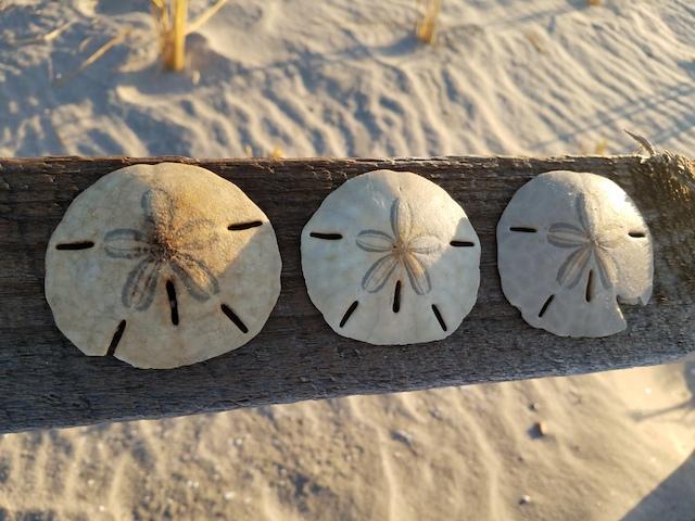 SandDollars